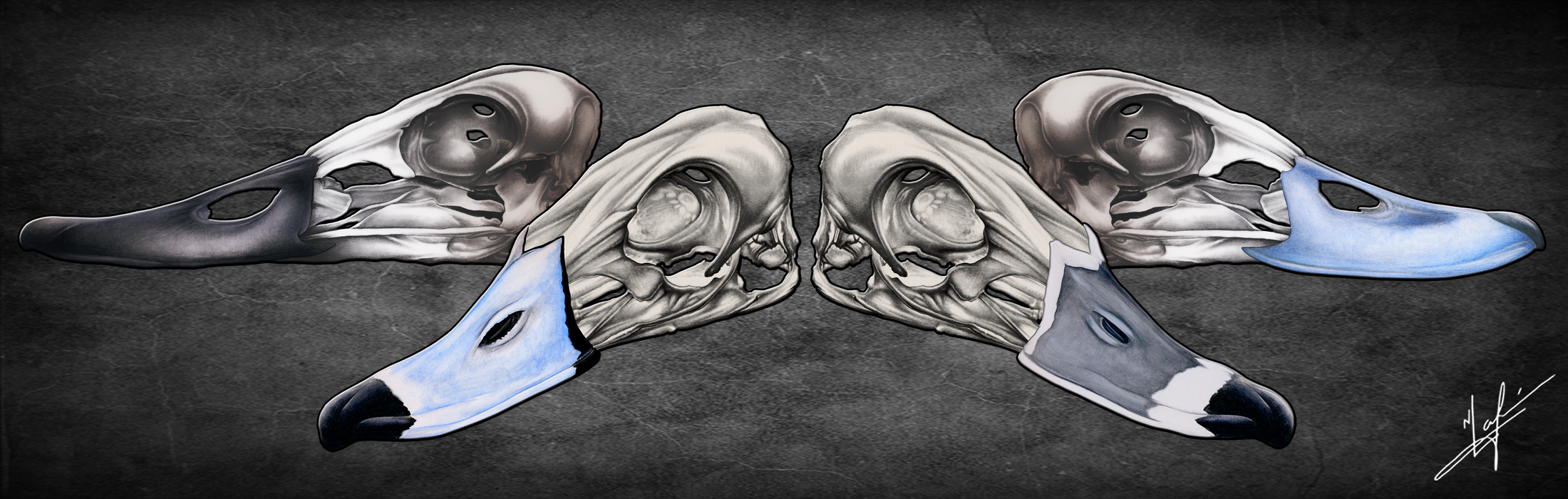 Diver Duck Skulls